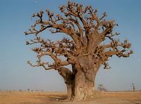 Schöner(er) Baum gesucht...