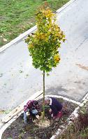 Unser erster Baum - ein Beamter?