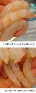 Garnelen-ventralem-Gefaess