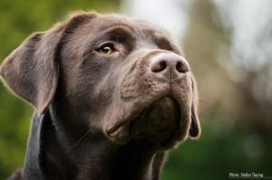 Watchful Cooper